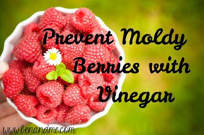 Frugal Family — Prevent Moldy Berries with Vinegar!