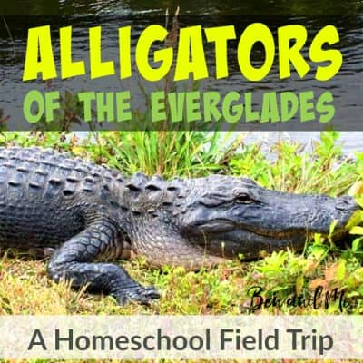 Alligators of the Everglades