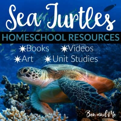 The Turtle Hospital + Sea Turtle Homeschool Resources