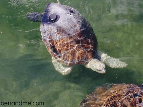 sea turtle hospital