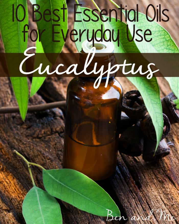 Best Essential Oils for Everyday Use -- Eucalyptus Essential Oil