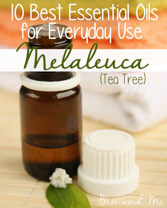 Best Essential Oils for Everyday Use -- Melaleuca Essential Oil Tea Tree Essential Oil