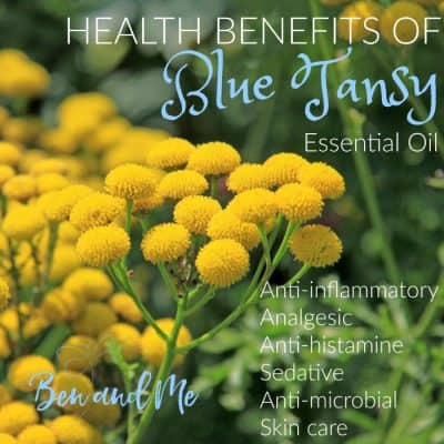 Health Benefits of Blue Tansy Essential Oil with Massage Oil Recipe