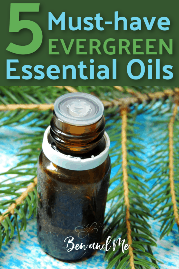 Evergreen essential oils can be enjoyed anytime, but there's something extra special about using them during the fall and winter months. Whether you choose to diffuse them, apply them topically, or use them in your favorite recipes, there are several must-have evergreen essential oils you should consider adding to your fall stash now. Includes 5 essentialoil recipes. #aromatherapy #essentialoils #pineessentialoil #juniperberryessentialoil #cypressessentialoil #cedarwoodessentialoil #balsamfiressentialoil #essentialoilrecipes #howtouseessentialoils #essentialoilbeginners